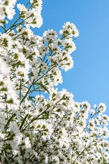Bloemen in het ontwerp van natuurlijke donkere tinten.