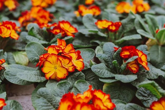 Bloemen in kas