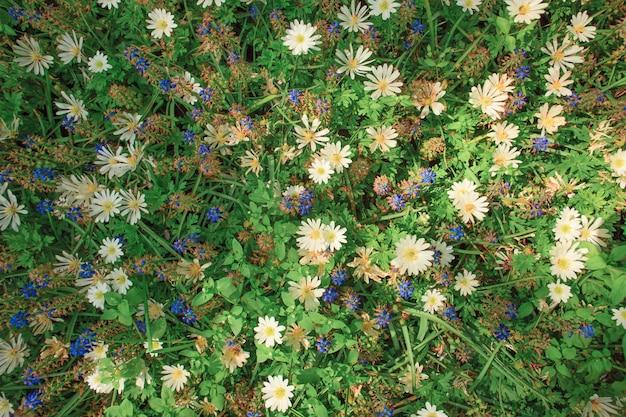 Bloemen in nederland of holland