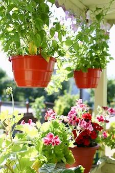 Bloemen in potten op de van de de vensterbank van het balkonvenster de lenteachtergrond