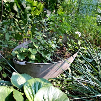 Bloemen in potten tuin