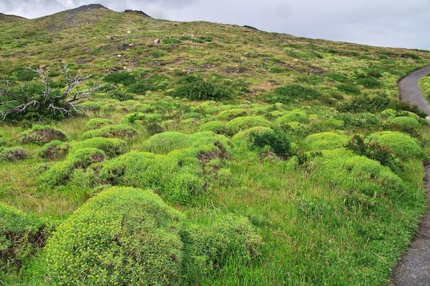 Bloemen in torres del paine national park, patagonië, chili