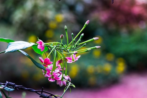 Bloemen in volle bloei in de tuin op een zonnige dag