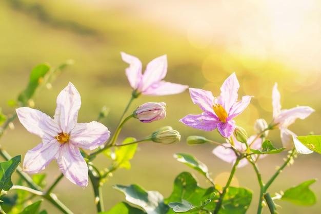 Bloemen mooi met zonlicht met onduidelijk beeldachtergrond