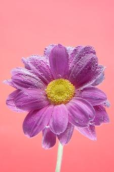 Bloemen onder water, paarse chrysant met luchtbellen op seringen