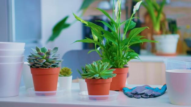 Bloemen op de keukentafel geplaatst om thuis opnieuw te planten. vruchtbare grond met een schop in pot, witte keramische pot en bloemkamerplanten voorbereid om thuis te planten, tuinieren voor huisdecoratie