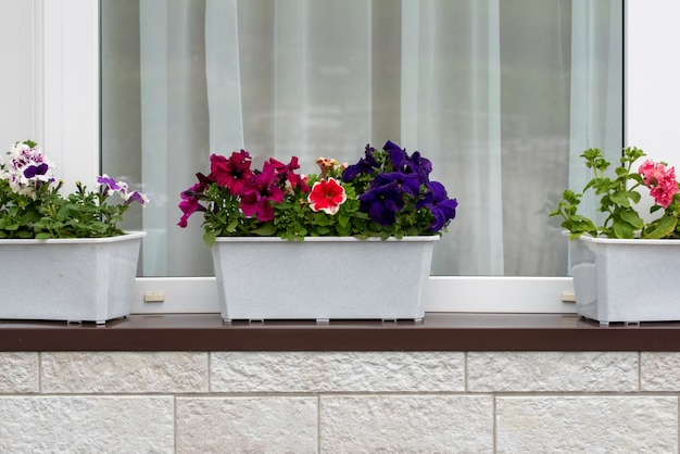 Bloemen op de vensterbank. mooie potten met bloemen