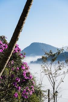Bloemen op de voorgrond met veel mist en wolken bedekken het uitzicht op de stad