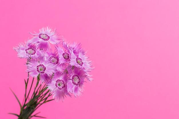 Bloemen op een roze achtergrond