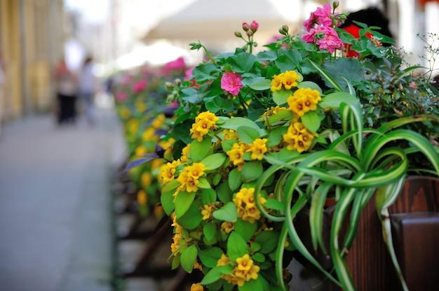 Bloemen op het terras in het restaurant