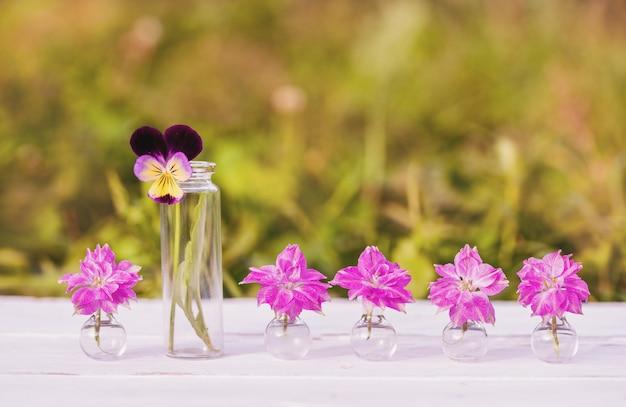 Bloemen op houten achtergrond. mooie bloemen van gelichrysum. outdors in dorp, zonsondergang in de avond, zonlicht.