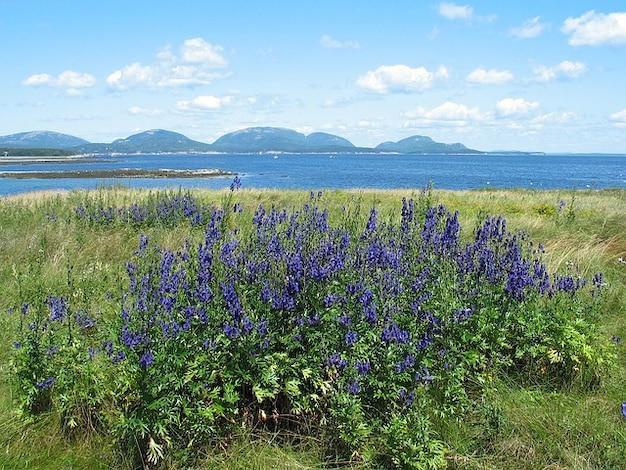 Bloemen park acadia wilde planten maine nationale