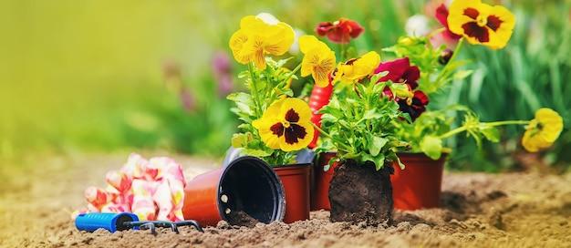 Bloemen planten in de tuin. selectieve aandacht natuur.