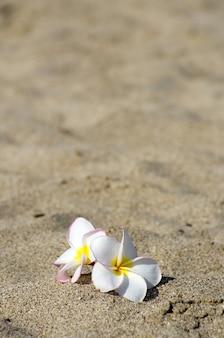 Bloemen plumeria alba op het zand