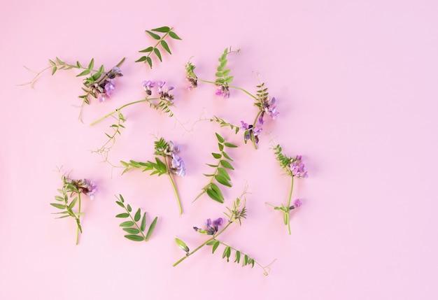 Bloemen samenstelling. bloemmotief met roze wilde bloemen, groene bladeren op roze achtergrond. plat lag, bovenaanzicht. kopieer ruimte.