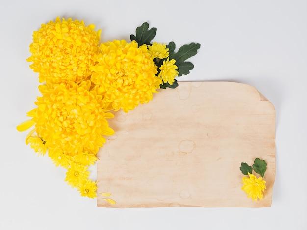 Bloemen samenstelling. gele chrysanten madeliefjebloemen met oude blanco papieren notitie op witte achtergrond. pasen, herfst, zomer, lente concept. platliggend, bovenaanzicht Premium Foto