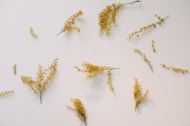 Bloemen samenstelling gele mimosa bloemen op witte achtergrond