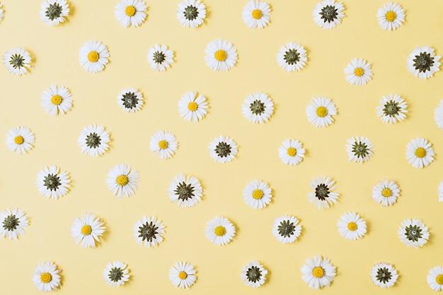 Bloemen samenstelling. kamillebloemen op pastelkleurblauw