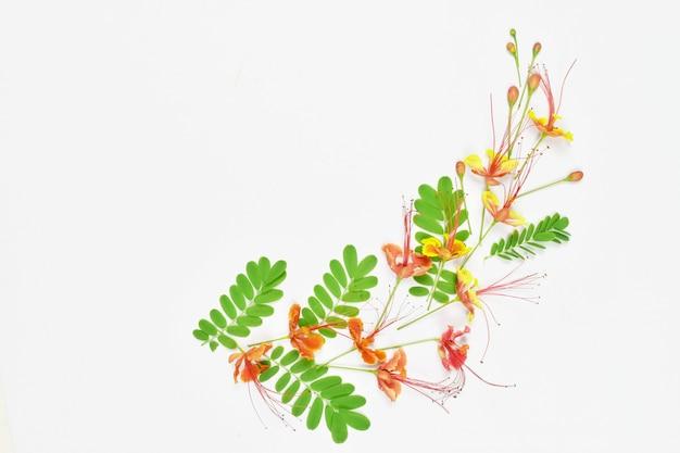 Bloemen samenstelling patroon gemaakt van rode flamboyante bloemen op witte achtergrond met kopie ruimte