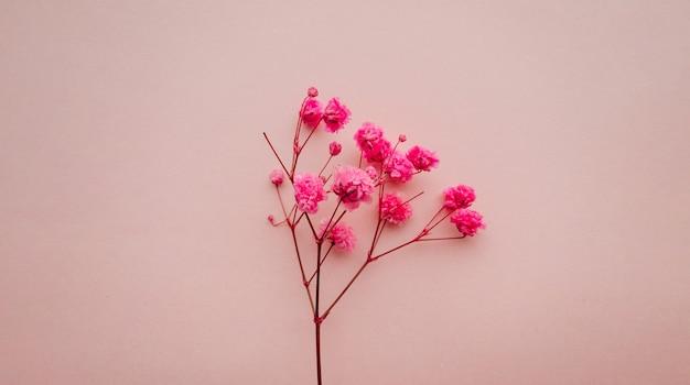 Bloemen samenstelling roze bloemen op zacht roze achtergrond lente zomer concept plat lag bovenaanzicht