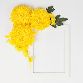 Bloemen samenstelling. witte rand met gele chrysanten madeliefjebloemen op witte achtergrond. pasen, herfst, zomer, lente concept. platliggend, bovenaanzicht