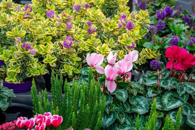 Bloemen te koop op een bloemenmarkt, amsterdam, nederland. flora.