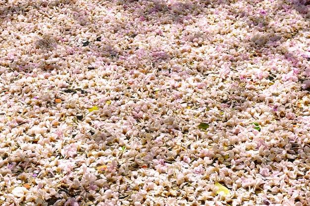 Bloemen vallen uit de boom op de grond