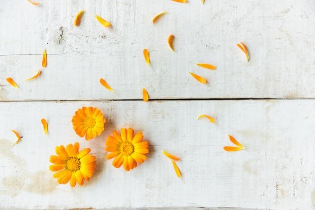 Bloemen van calendula