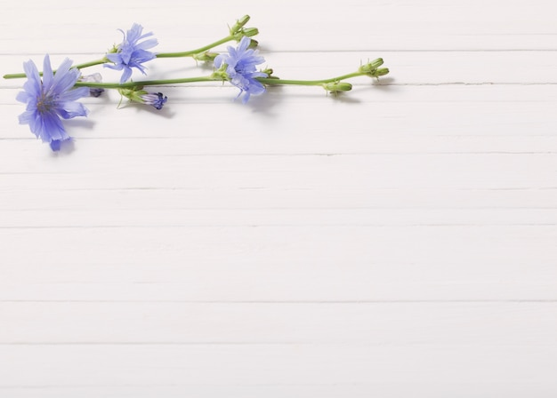 Bloemen van cichorei op de witte houten achtergrond