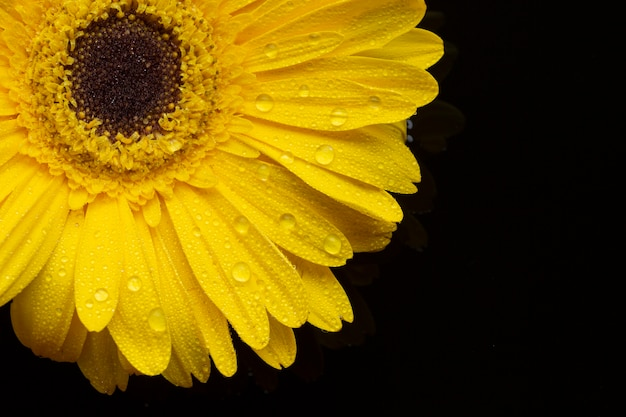 Bloemen van close-up de gele gerbera met bloemblaadjes