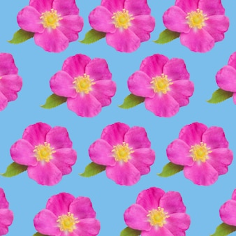Bloemen van hond-rose rozenbottelpatroon oppervlak