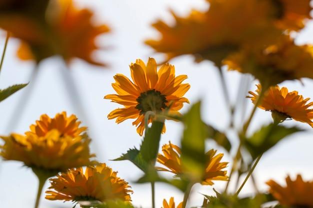 Bloemen worden gekweekt voor landschapsarchitectuur Premium Foto