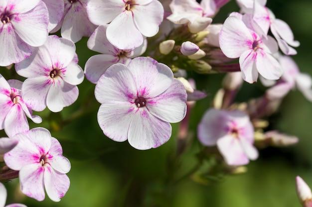 Bloemen worden gekweekt voor landschapsarchitectuur