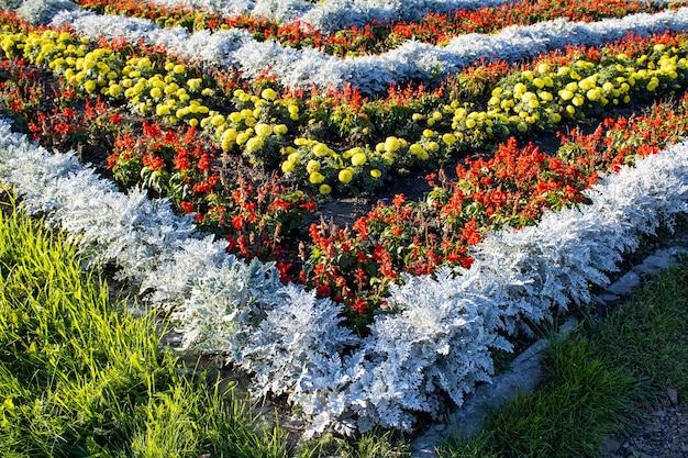 Bloemenachtergrond kleurrijk bloembed in stadsontwerp