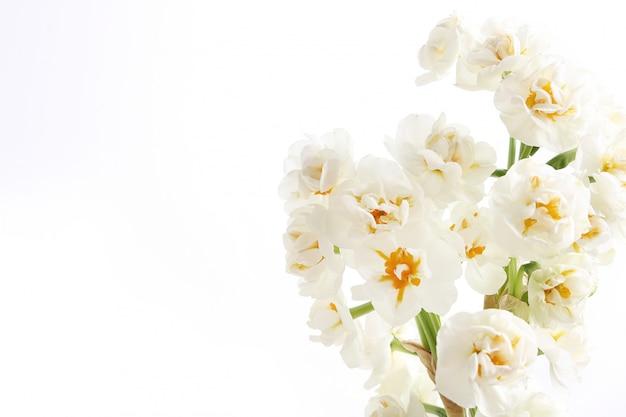 Bloemenboeket met copyspace wordt geïsoleerd die