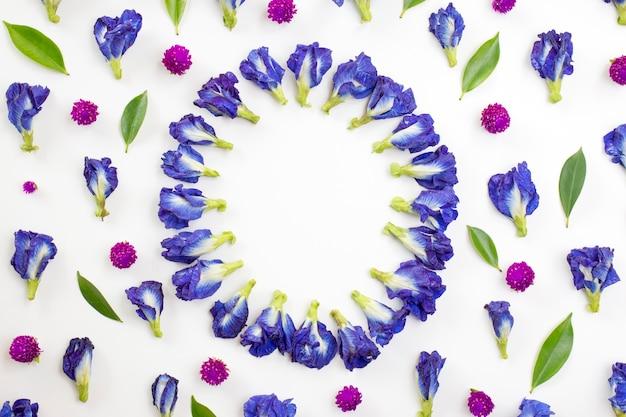 Bloemencirkel van blauwe erwt en bolamarant op witte achtergrond. plat leggen, bovenaanzicht.