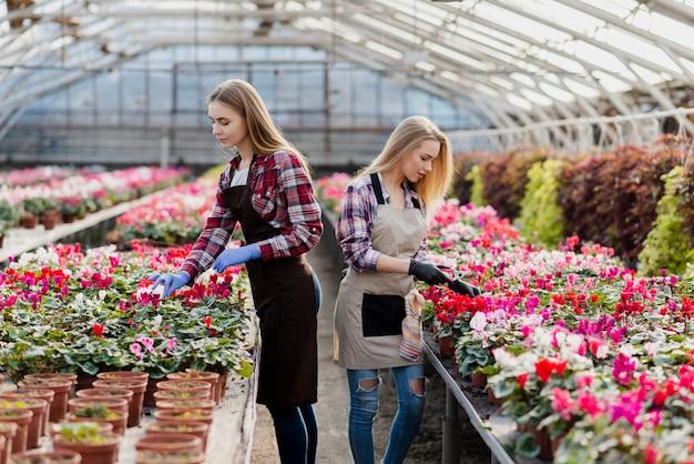 Bloemenliefhebbers die ervoor zorgen in de kas