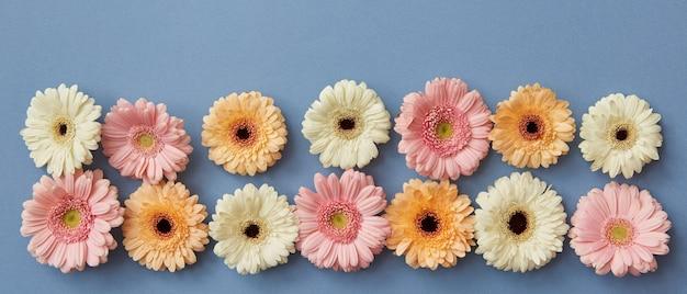 Bloemenpanorama van gerbera's op een blauwe papieren achtergrond. van moederdag als ansichtkaart of als screensaver op de site. plat leggen