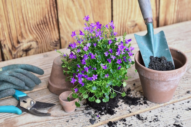 Bloemenplant en een schop in een bloempot vol vuil voor oppotten op een houten tafel