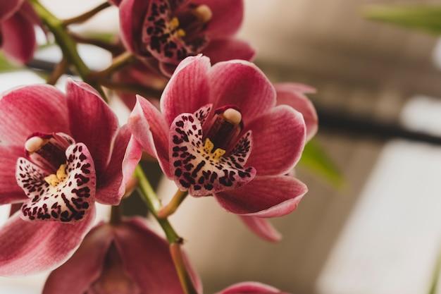 Bloemensamenstelling met elegante stijl