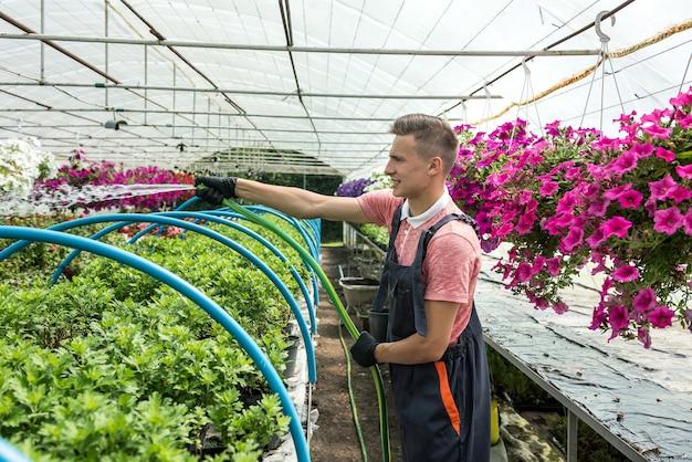 Bloemist wateren met tuinslang verschillende kleuren bloemen in industriële broeikas