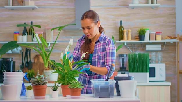 Bloemistvrouw die 's ochtends bloemen op de keukentafel afveegt. met behulp van vruchtbare grond met schop in pot, witte keramische bloempot en planten voorbereid voor herbeplanting voor huisdecoratie zorg voor hen