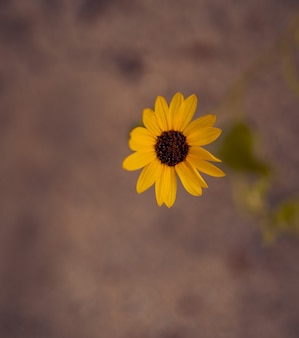 Bloemkleur geel zonnebloem behang