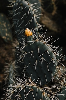 Bloemknop groeit op vetplant