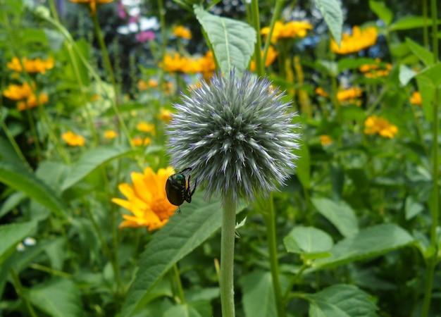 Bloemknop met een insect in het bloemenveld