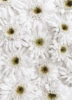 Bloemmotief gemaakt van witte kamille madeliefjebloemen. platliggend, bovenaanzicht