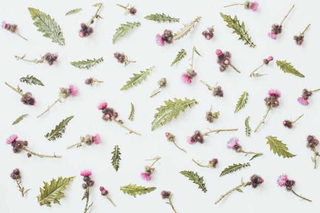 Bloemmotief van distel met roze en paarse bloemen, groene bladeren, takken en doornen.