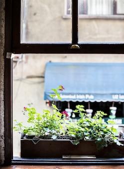 Bloempot bij het raam
