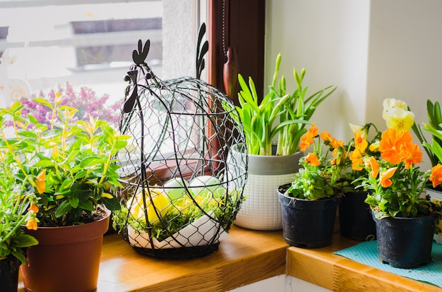 Bloempotten voor kleine tuin, terras of terras. zaailingen van prachtige lente bloemen.