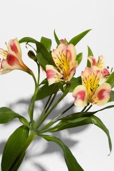 Bloesem bloem bovenaanzicht